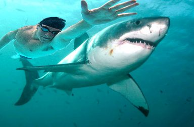 Shark Weak